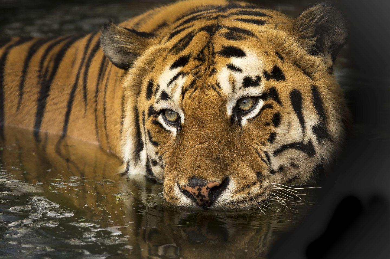 education on wildlife tourism